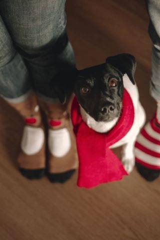 fotografía detalles pies familia con perrito mirando